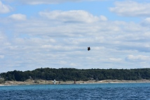 Monarch Butterfly crossing Lake Michigan for Wisconsin